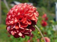 Květina v zahradě